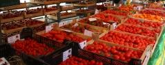 20140810 Tomatoes. 300 types of